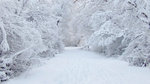 8833791-beautiful-winter-snow-backgrounds