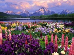 Beautiful-Flowers-HD-Wallpapers-beautiful-flowers-mountain