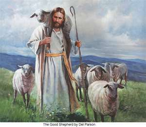 shepherd picture