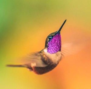 hummingbird-photography-wcth19