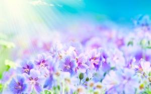 summer-flowers-sunlight-2560x1600