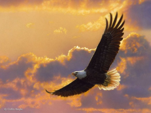 Soaring-Spirit-Eagle-