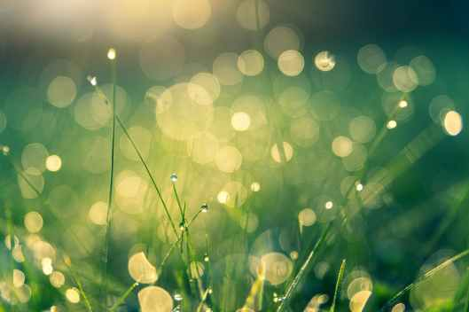 green grass with bokeh lights